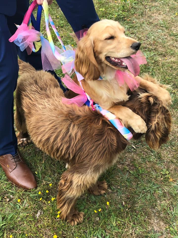 Imagde of two dogs at the KareBear Kennels Wedding