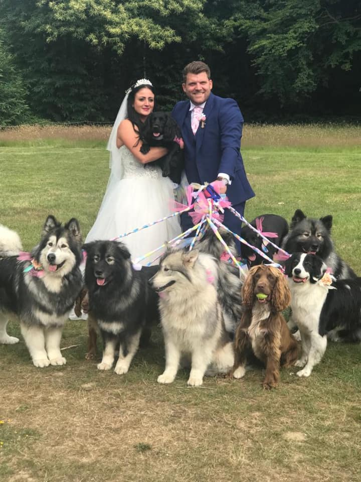Image of bride and groom at wedding with dogs